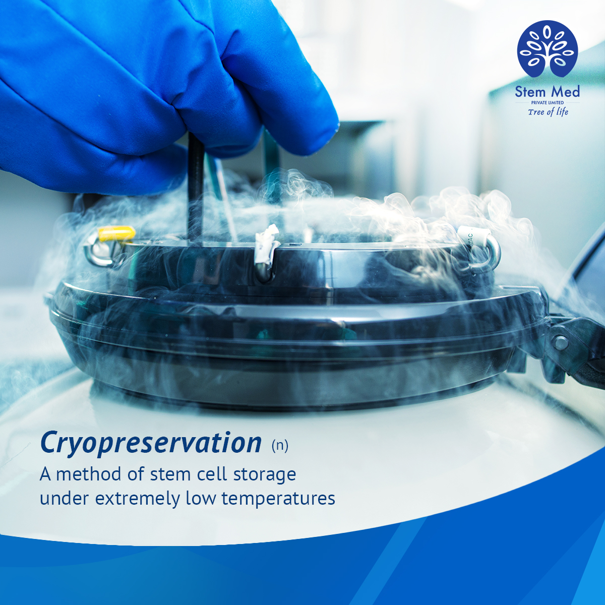Stem Cell Cryopreservation