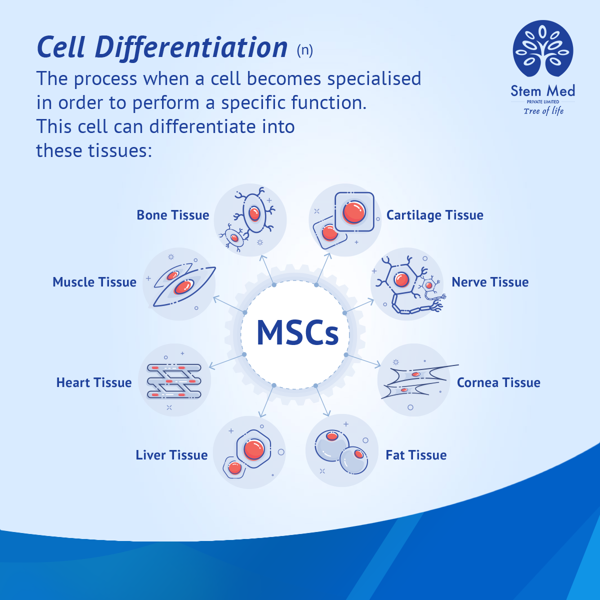 Stem Cell Differentiation